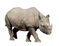 rhinocéros Photographie stock libre de droits
