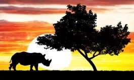 Rhinocéros au coucher du soleil Photo libre de droits