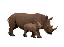 Rhinocéros avec le veau Photographie stock libre de droits