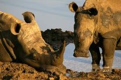Animaux africains du sud Images stock
