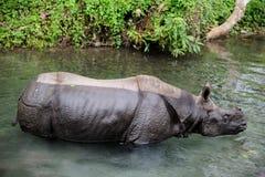Rhinocéros dans la réserve naturelle de Jaldapara, Inde Image libre de droits