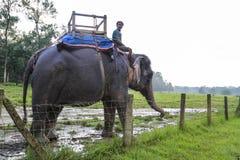 Rhinocéros dans le Forest Park dans chitwan, Népal Images libres de droits
