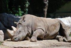 Rhinocéros de sommeil photographie stock