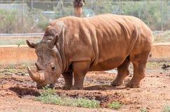 Rhinocéros en parc national Photographie stock