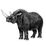 Rhinocéros laineux Image libre de droits
