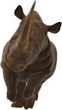 Rhinocéros, rhinocéros, faune, d'isolement, chargeant Photos stock