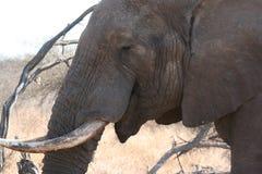 Rhinocéros sud-africain photo libre de droits