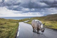 Rhinocéros sur la route isolée Photos stock