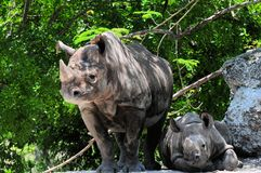 Rhinocero y bebé negros femeninos Foto de archivo