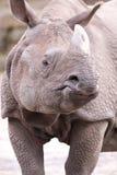 rhinoceros Стоковое фото RF