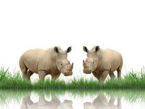 rhinoceros Стоковые Фото