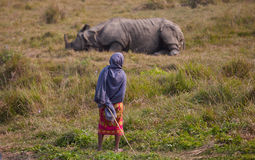 Rhinoceros. Nepal's Royal Chitwan National Park is located in the southern plains, an area of 932 square kilometers. Park in Sal and a lot of pastures Royalty Free Stock Photo