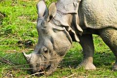 Rhinoceros. In Kaziranga National Park Stock Photo