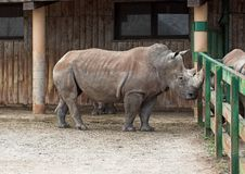 Rhinoceros. In a zoo royalty free stock photography