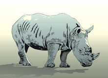 Rhinoceros. The vector image of the rhinoceros Stock Photography