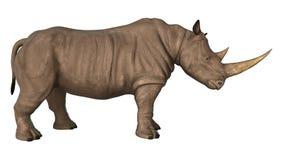 rhinoceros Foto de Stock