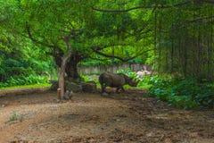 rhinoceros Fotos de Stock