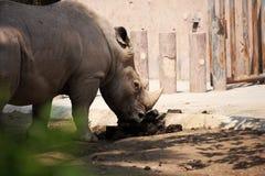 rhinoceros Stockbild