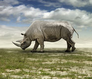 rhinoceros Imagem de Stock