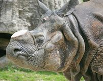 Rhinoceros 7 Royalty Free Stock Photos