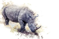 rhinoceros Fotografia de Stock Royalty Free