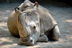 Free Rhinoceros Stock Images - 9879464