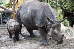 Rhinoceros and Baby Stock Images