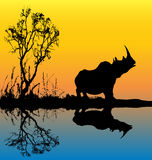 Rhinoceros Background. Illustration of a Rhinoceros at a dawn watering hole Royalty Free Stock Images