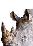 Rhinoceros eye close-up Royalty Free Stock Images