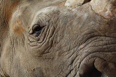 Rhinoceros eyes and skin Stock Images