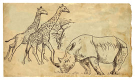 Rhinoceros and Giraffes Stock Images