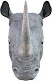 Rhinoceros Head, Nature, Wildlife, Isolated Royalty Free Stock Photography