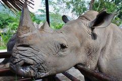 Rhinoceros In The Zoo Stock Photo