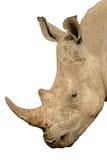 Rhinoceros isolated Stock Photo