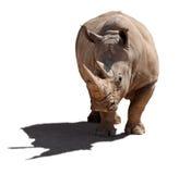 Rhinoceros, isolation, a white background. Rhinoceros with a shade, isolation on a white background Royalty Free Stock Photography