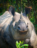 Rhinoceros in the Jungle Royalty Free Stock Photos