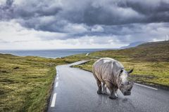 Rhinoceros on lonely road Stock Photos