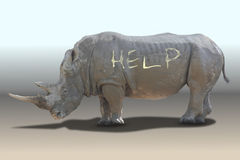 Rhinoceros need help Royalty Free Stock Photo