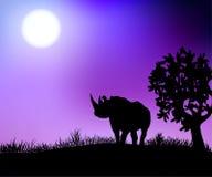 Rhinoceros in the night savannah. A rhinoceros in the night savannah stands under a tree vector illustration Stock Photo