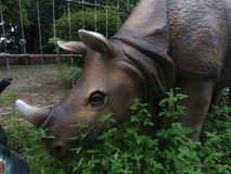 Rhinoceros in the park royalty free stock photo