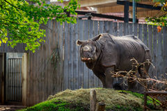 Rhinoceros in Planckendael zoo Stock Photos