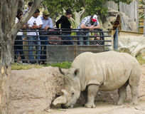 A Rhinoceros at the Reid Park Zoo Stock Photo