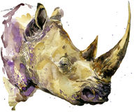 Rhinoceros. Rhinoceros watercolor. African animal hand drawn illustration. Rhinoceros watercolor background. Stock Photos