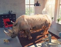 Rhinoceros in the room Stock Photos