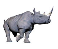 Rhinoceros running Stock Photography