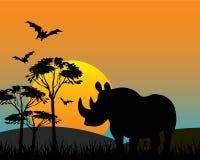 Rhinoceros in savannah Stock Images