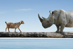 Rhinoceros and sheep walking over the single wooden bridge Stock Photo
