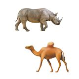 Rhinoceros side view, one hooved camel walking Stock Photo