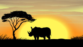 Rhinoceros under a tree Royalty Free Stock Image