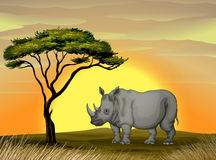 Rhinoceros under a tree Royalty Free Stock Images